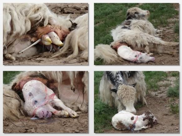 birth of yakity yak