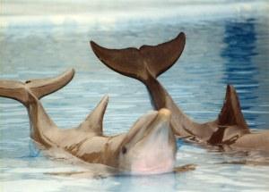 delphin tótem animal