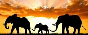 elephant symbol totem