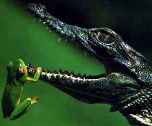 la magia del cocodrilo es el ser un tótem de los más ancestrales