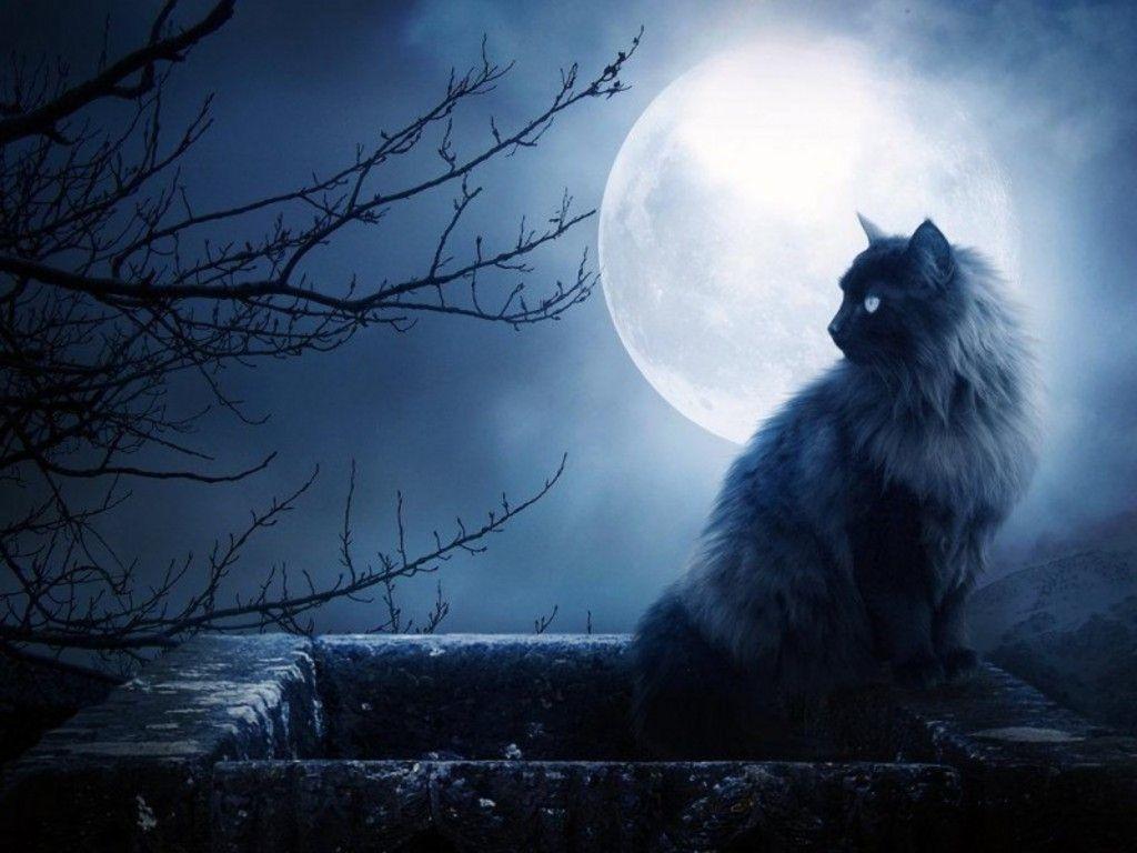 Resultado de imagen para fotos en blanco y negro de la luna con gato
