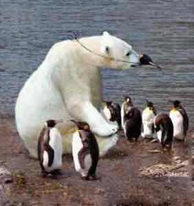 polar bear and pinguin
