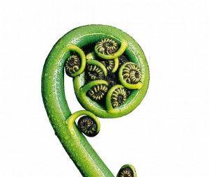 espirales de koru de las flores de las que se inspiran