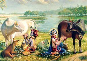 colgante vaca hindú Aditi , en India las vacas son sagradas
