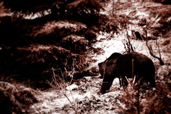 El Bosque - Surreal Wildlife Photography - Bear