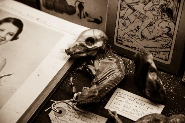 Mummified Pig Fetus