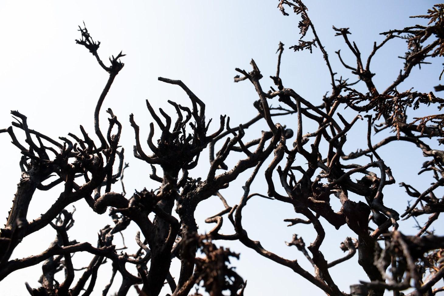 verbrannte Zweige ragen in den Himmel