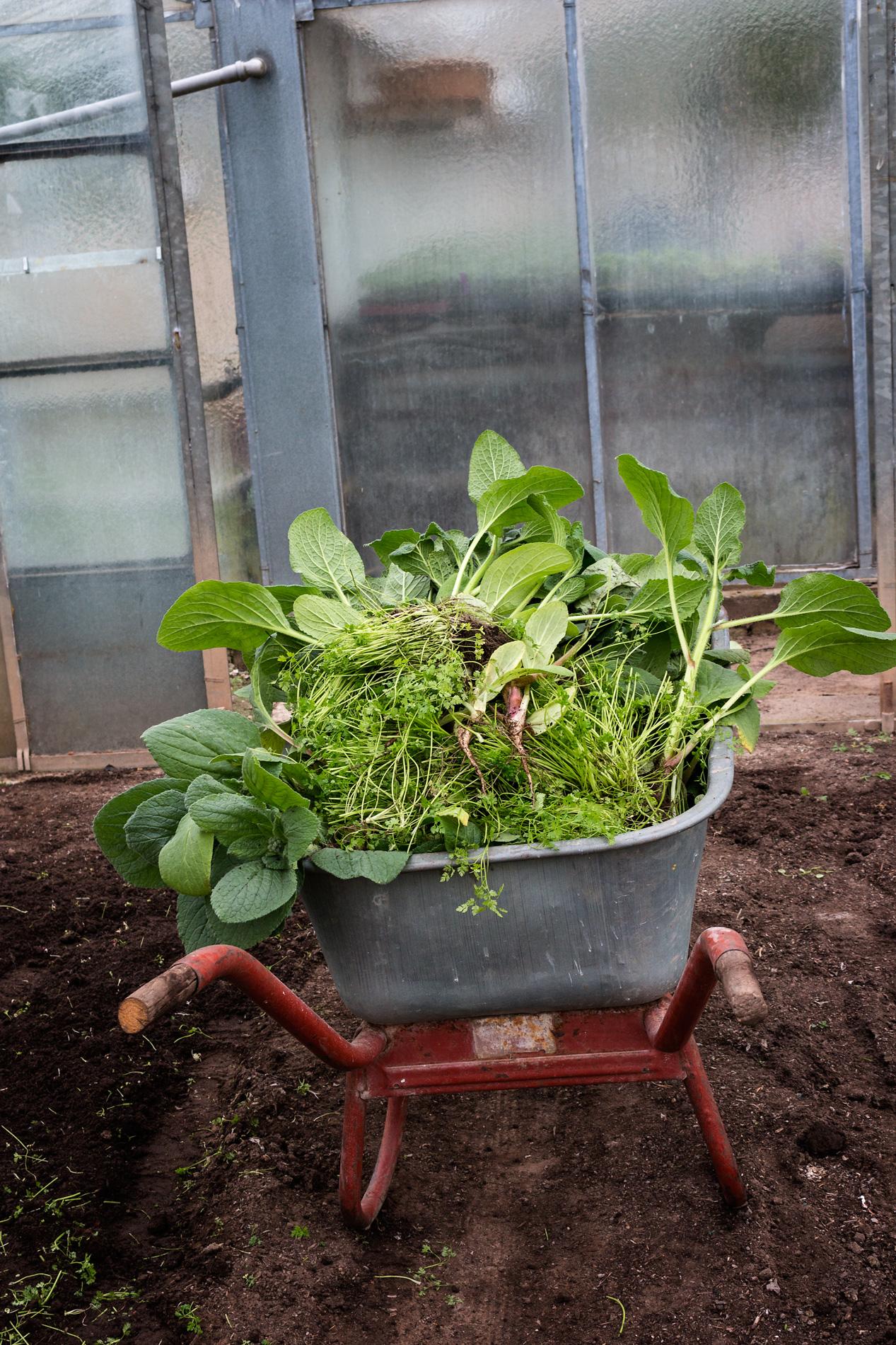 Schubkarre mit Pflanzenresten