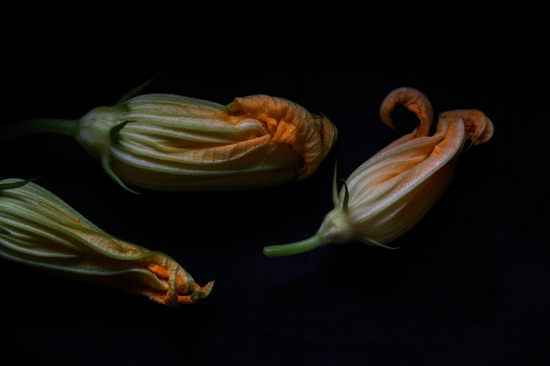 Zucchiniblueten