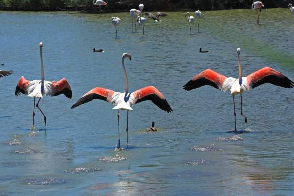 pink mood board ege carpets, Enchanting flamingos in salt lakes inspire this pink mood board