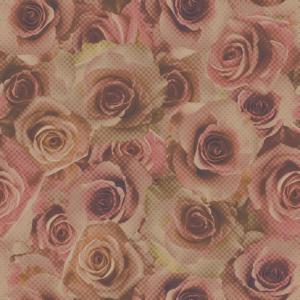 rosy rose  rose