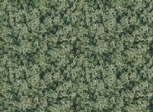 wild meadow  green