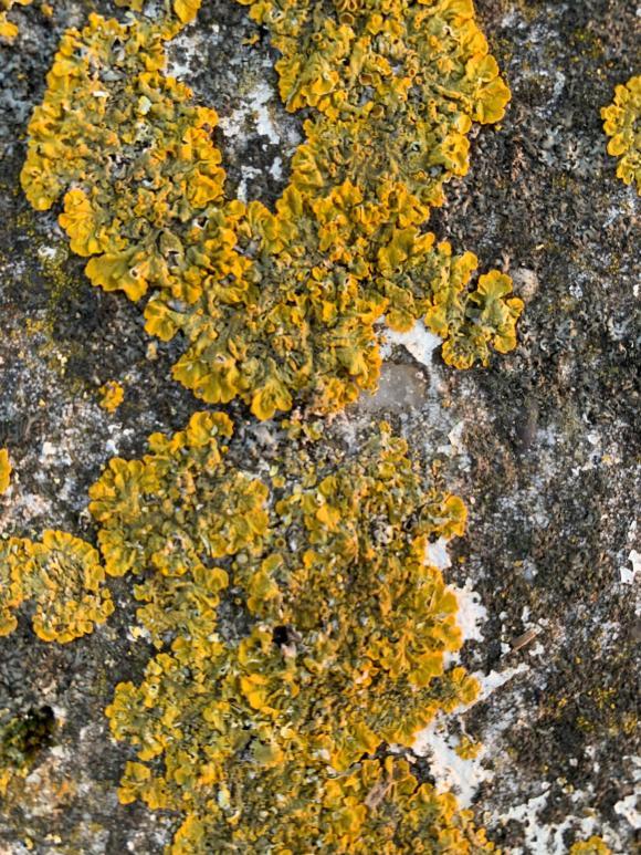 floral carpet, North Sea corals create organic type of floral carpet
