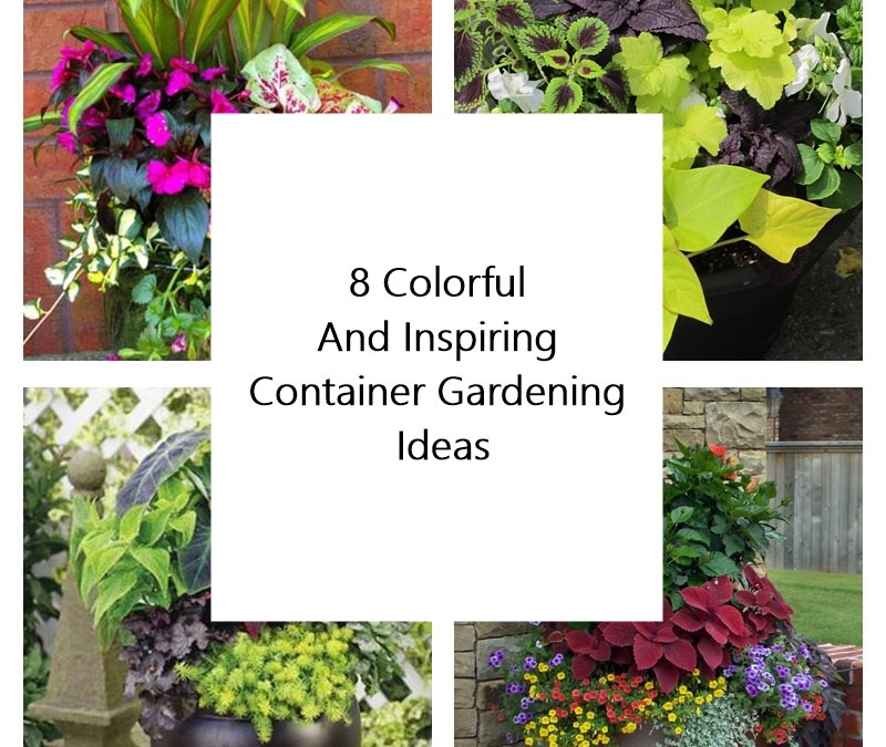 8 Colorful And Inspiring Container Gardening Ideas