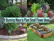 9 Stunning Ways To Plant Small Flower Ideas
