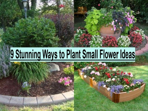 9 Stunning Ways To Plant Small Flower Ideas