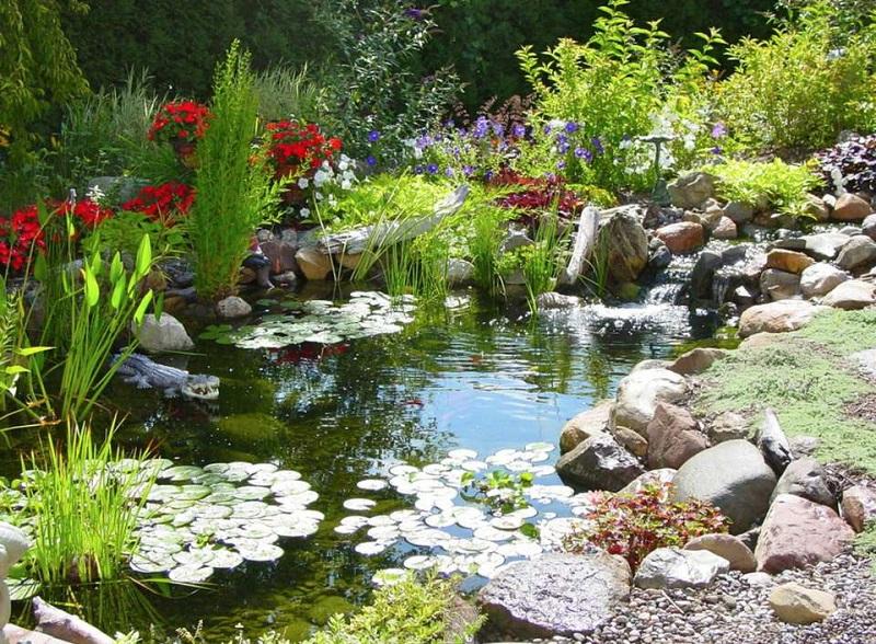 Acorn Ponds
