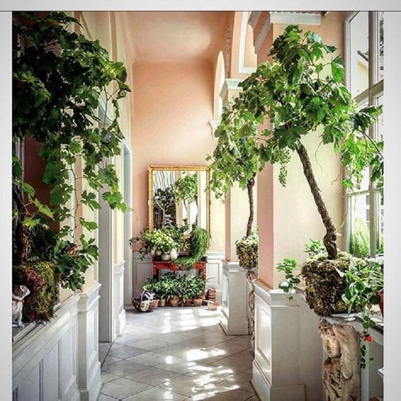 Hallway Indoor Garden