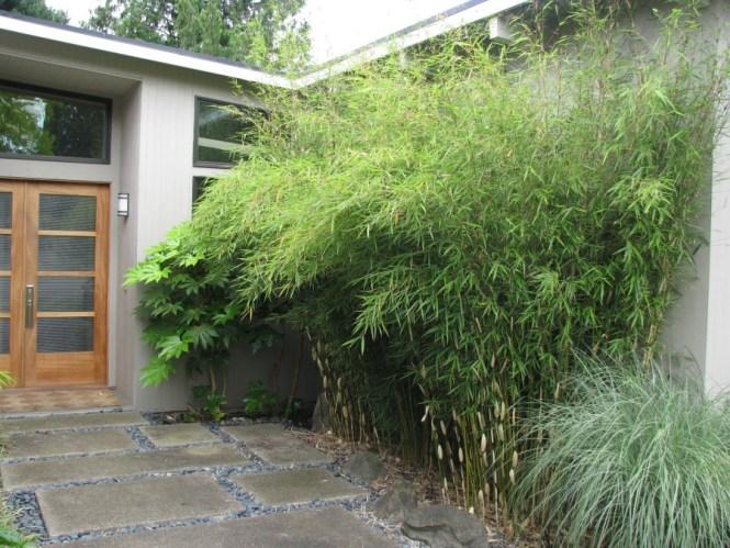 Non Invasive Clumping Bamboo