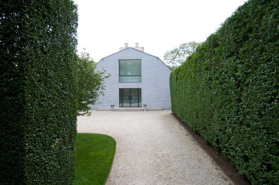 Privet Creates Tall Green Hedge Formations