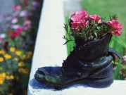 Old Boot Rose Planter