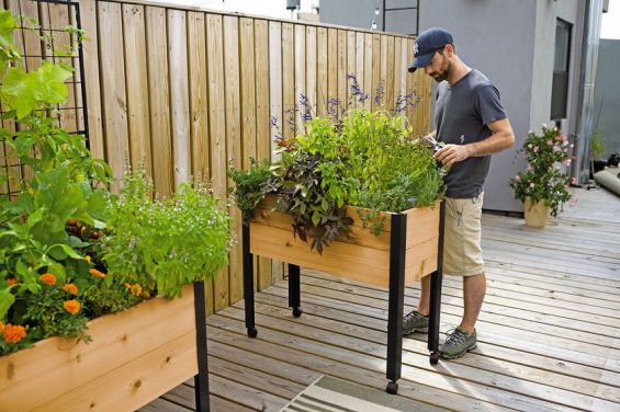 8420 Herbs In Standing Garden