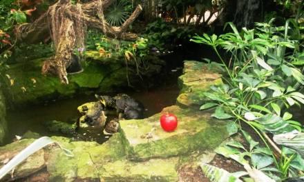 Lamberton Conservatory: Highland Park's Garden of Eden