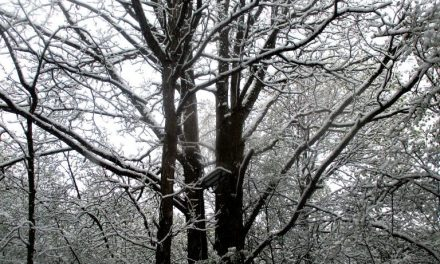 A hunter's tree stand on the Highland Crossing Trail during a late April snowfall