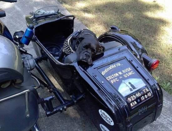 JD Whitaker & Rhonda Reynolds, Sidecar Dog Riders