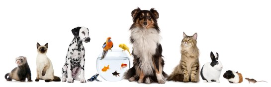bigstock-Group-of-pets-sitting-in-front-19492856