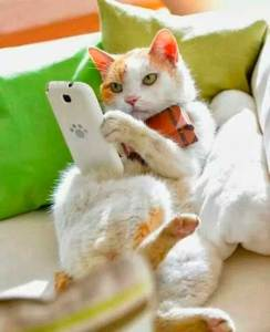 cat-on-phone