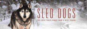 sled-dogs-1024x348