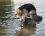 dog-in-flood