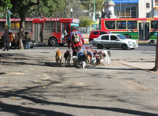 Dogwalking service