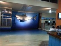 YHA hostel