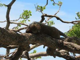 Macaque Monkey at Prachuap Khiri Khan