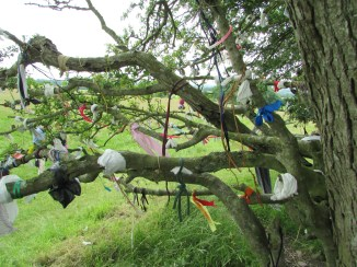 The fairy tree @ the hill of tara