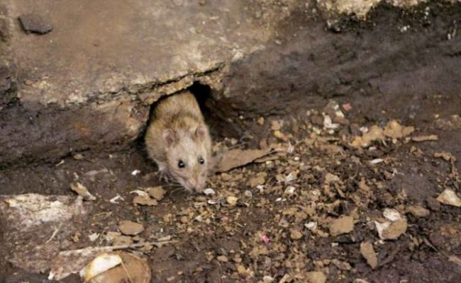 China Produces Another Virus Called Hantavirus Here S All