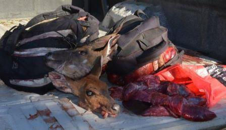 HORRIFIC END: The booty collected from a group of young poachers at Green Fountain Farm. The backpacks have carcasses of four bushbuck and a duiker. The plastic bag holds livers of eight animals. The heads of the animals are apparently taken to show customers which animal the meat they are buying comes from Picture: ROB KNOWLES