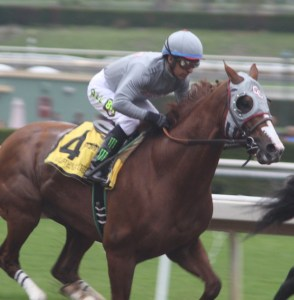 California Chrome on his way to winning the San Pasqual at Santa Anita. Photo by Terri Keith.