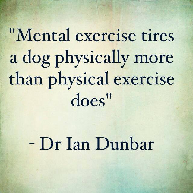 """Mental exercise tires a dog physically more than physical exercise does."" - Dr. Ian Dunbar"