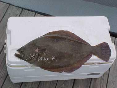 Floundering Again!