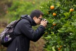 Tong was more interested in the oranges.
