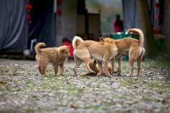 Even dogs were playful here.