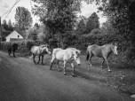 Then we bumped into some horses running around.