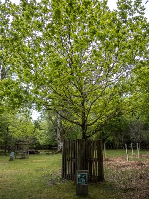 A tree that was planted by the Queen.