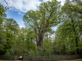 The oldest tree in the forest!!!