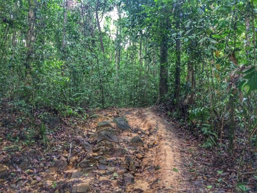 Tab Kak Hang Nak Hill Nature Trail, Krabi Thailand