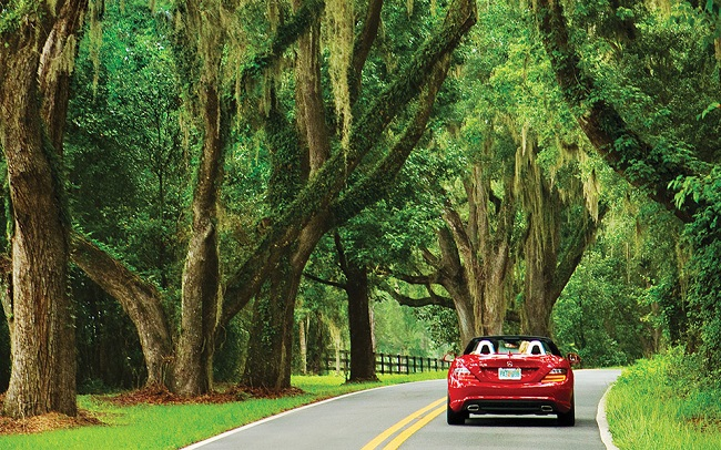 Leon County Commission Approves New Canopy Road Policy
