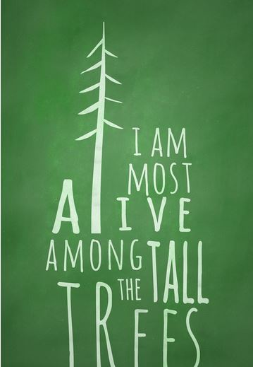i am moust alive among the tall trees